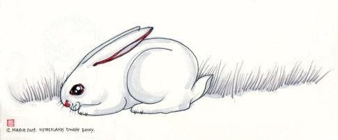 0312090-bunny