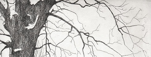 branches, etched and spit-bitten