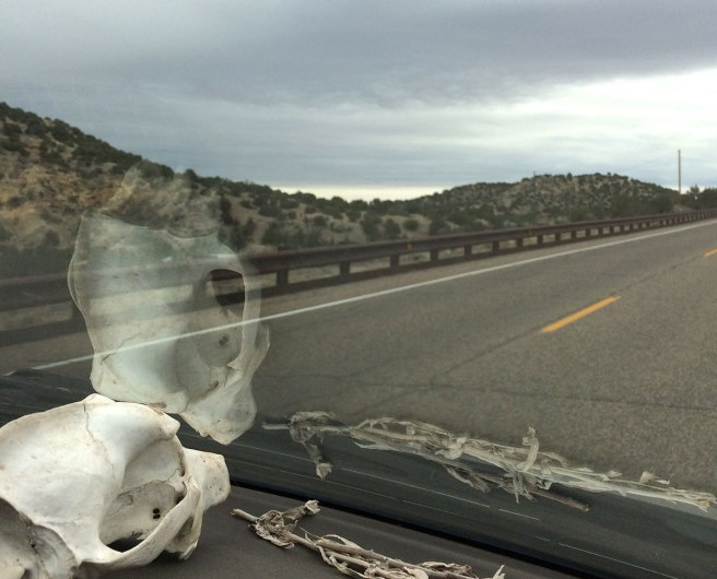 A skull and some sage on the dash, driving to Madrid, NM