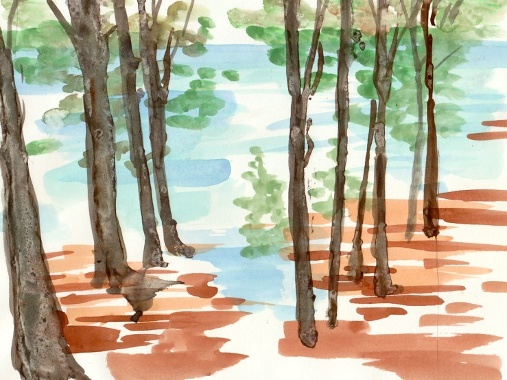 watercolor of a woods