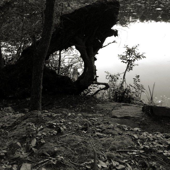 Peyton Pond at Fahnestock State Park