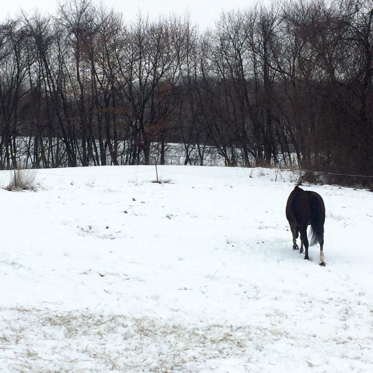 horse-badger