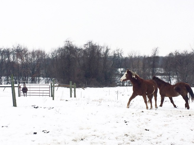 horses in snow running