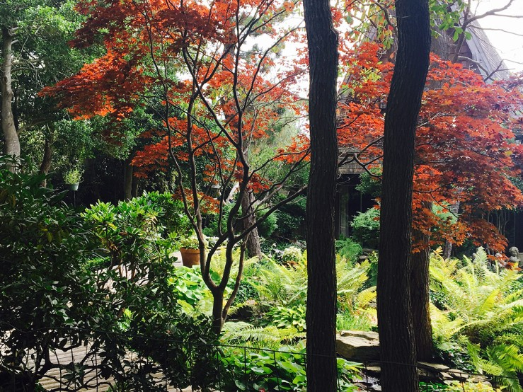 Fire Island Pines trees
