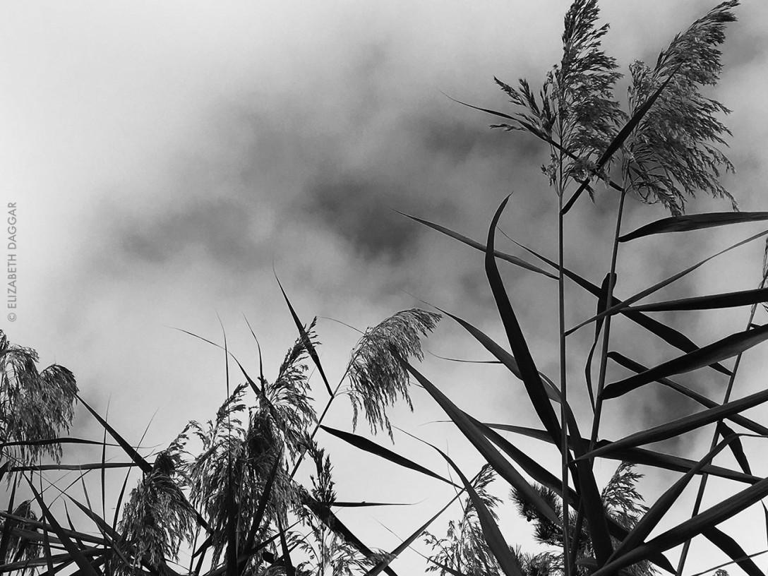 wild grasses in Fire Island