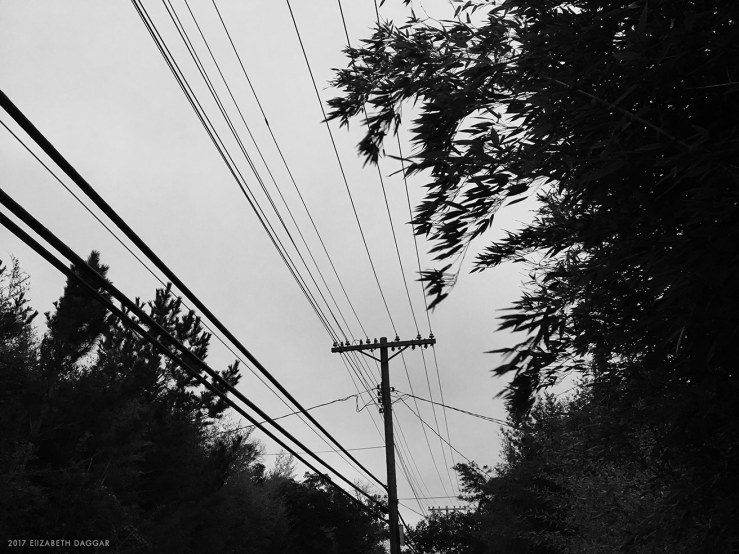 Wires on a barrier island
