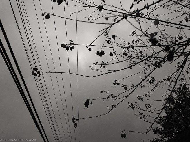 Wires and branches
