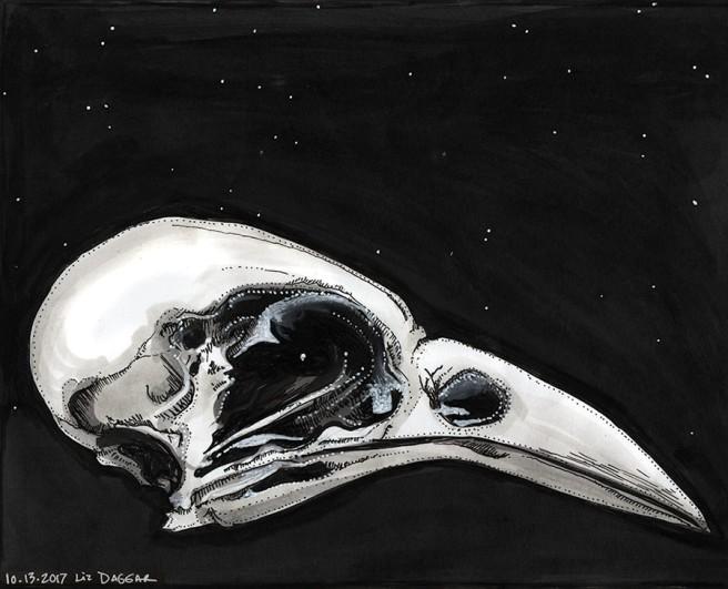 ink drawing of a bird skull