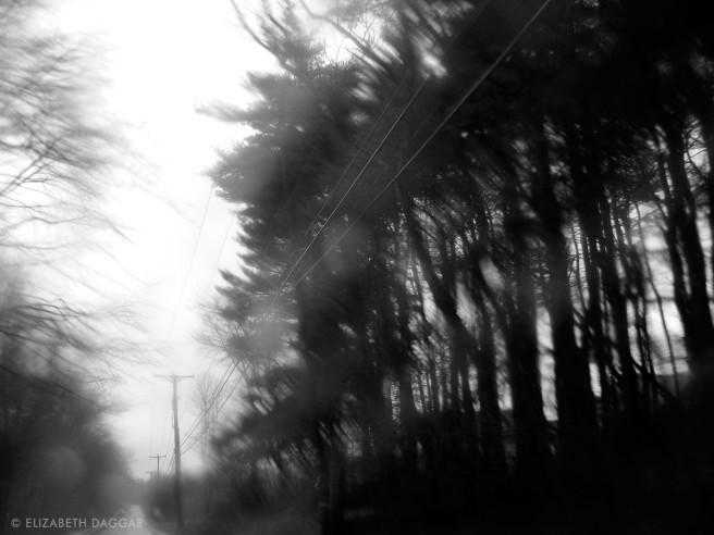 rain blurred trees photo by E Daggar