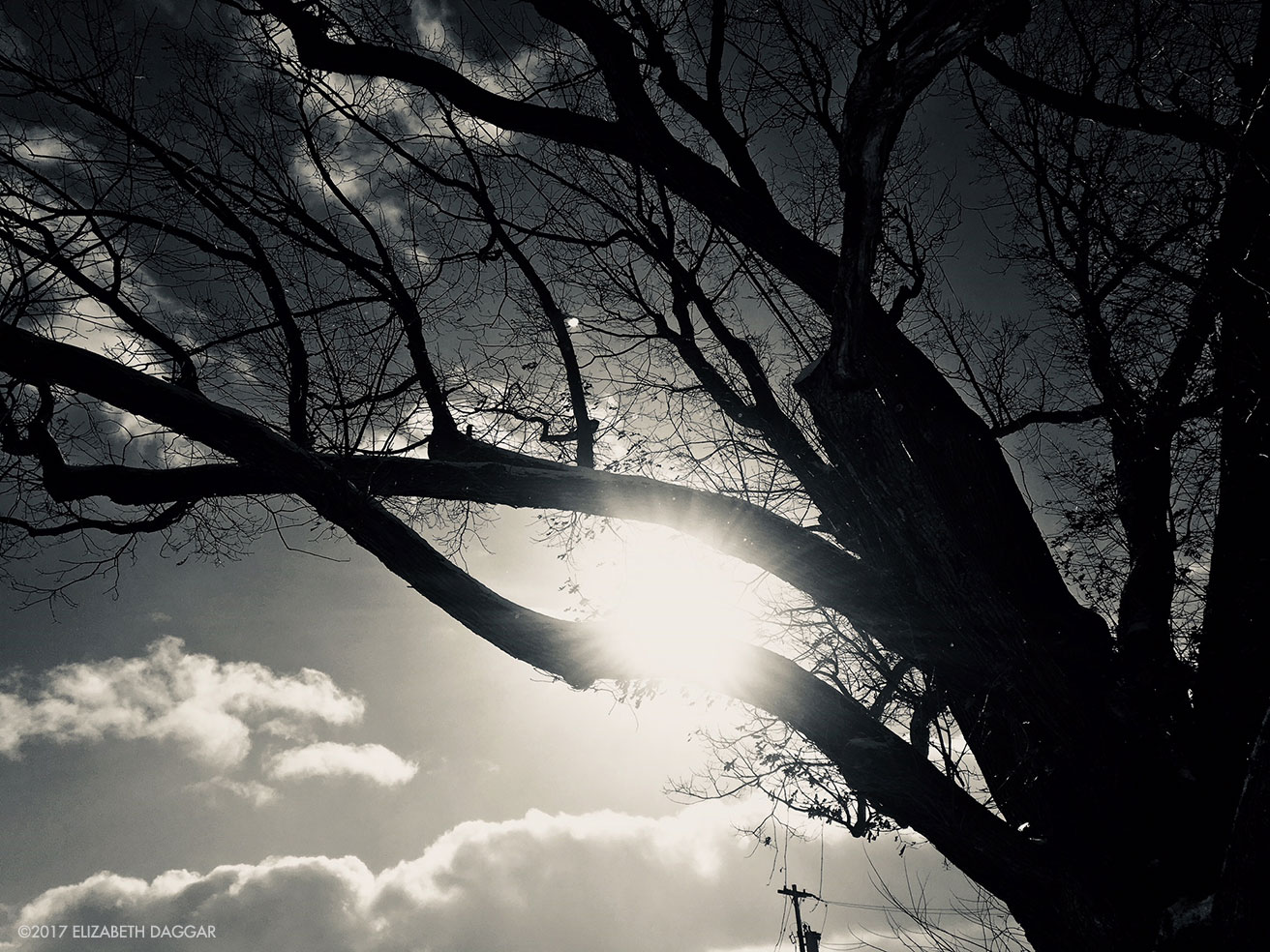 black and white photograph of sun coming through tree branches