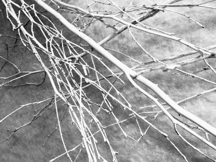 Black and white photo of winter branches