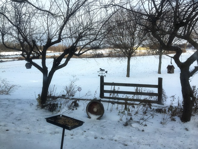 photo of the garden and field under snow
