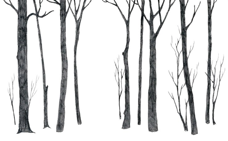 pencil drawing of yet more trees, stylized and simple