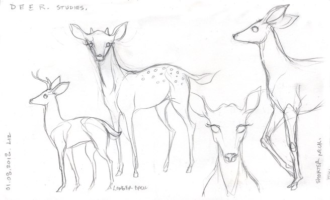 pencil sketches of deer