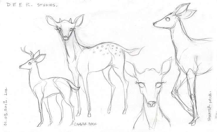 pencil sketches of deer