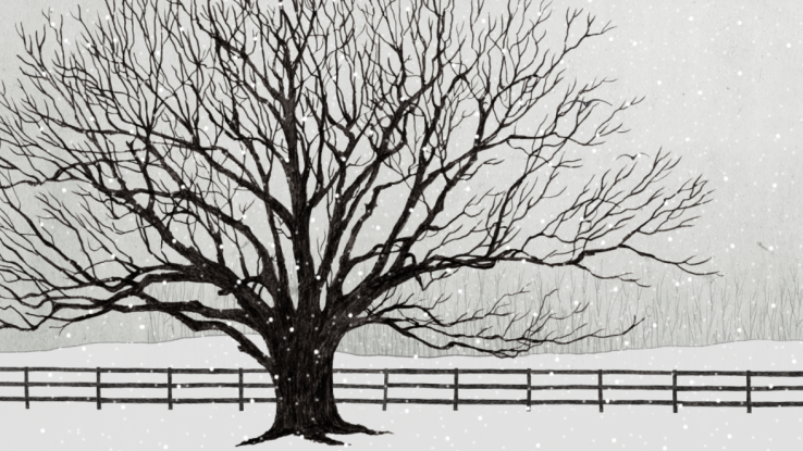 pencil snowscape with oak tree and fence