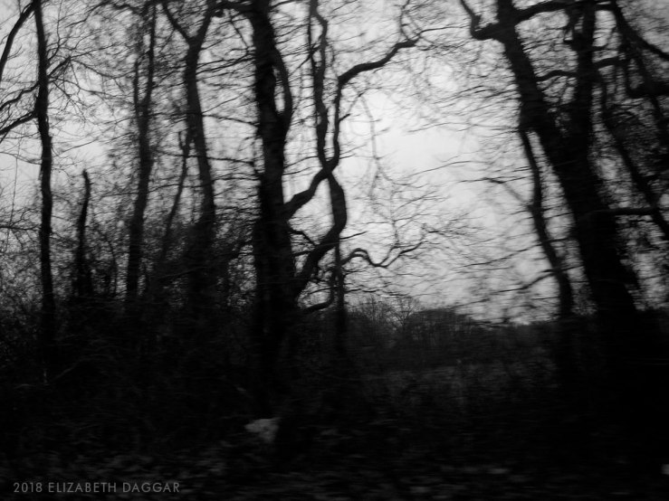 photo of blurred trees in winter