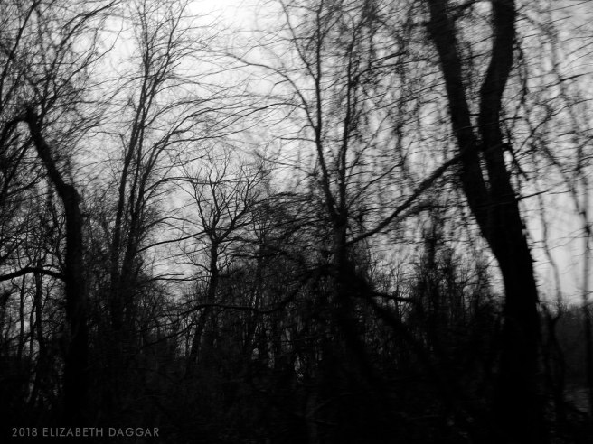 photo of a tangle of winter trees