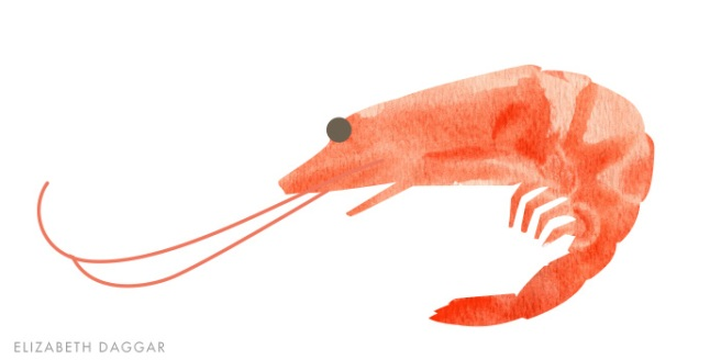watercolor of a prawn