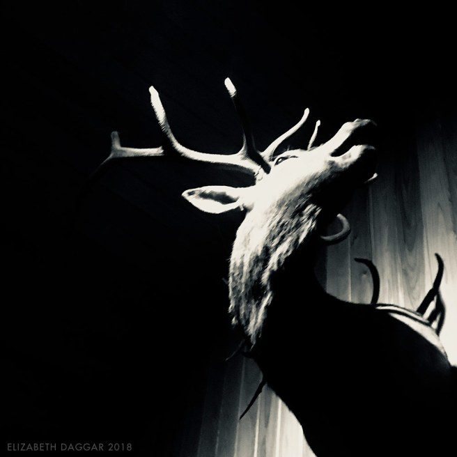 taxidermy deer head trophy with a dramatic angle to his neck