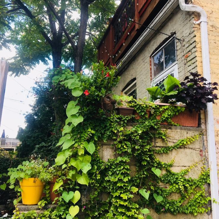 garden in Butcher's Hill, Baltimore