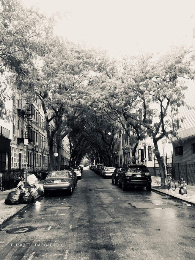 A street lined with an arched tunnel of Locust trees in Greenpoint
