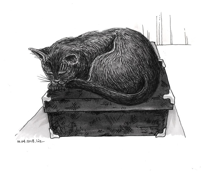 drawing of a cat sleeping on a box