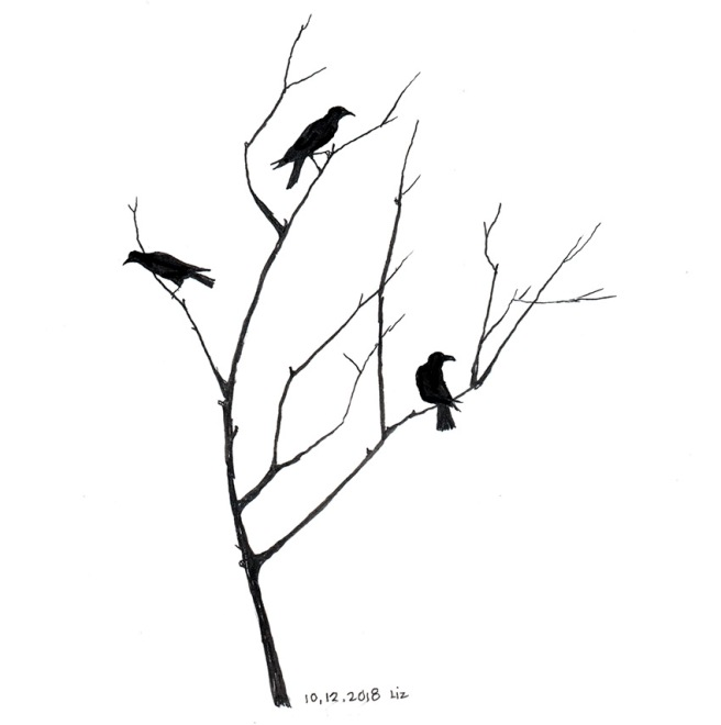 drawing of crows in a tree