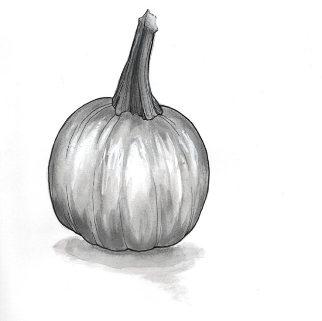 ink drawing of a small pumpkin