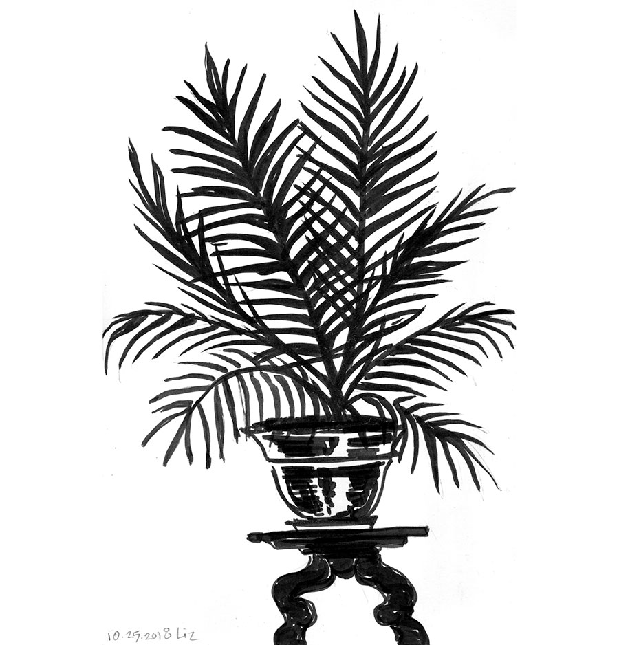 ink drawing of a palm plant